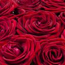 https://bonovo.isisflor.com/fileuploads/Produtos/Rosas/thumb__Bouquet_de_Rosas_em_vaso_02.jpg