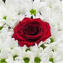 https://bonovo.isisflor.com/fileuploads/Produtos/Rosas/thumb__Perfeito_para_ti_02.jpg